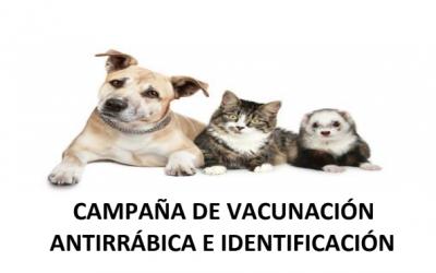 Campaña de vacunación       antirrábica e identificación